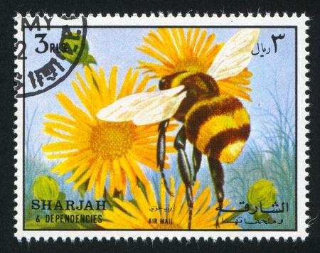 dependencies: SHARJAH AND DEPENDENCIES - CIRCA 1972: stamp printed by Sharjah and Dependencies, shows a Bee, circa 1972 Editorial