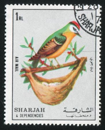 SHARJAH AND DEPENDENCIES - CIRCA 1972: stamp printed by Sharjah and Dependencies, shows Bird and Nest, circa 1972 Stock Photo - 17145866