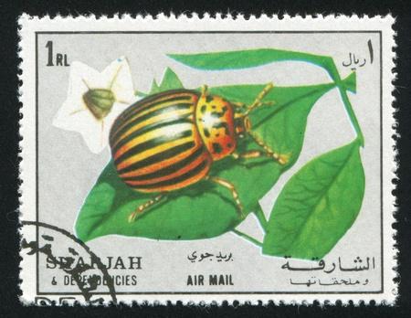 SHARJAH AND DEPENDENCIES - CIRCA 1972: stamp printed by Sharjah and Dependencies, shows Colorado beetle, circa 1972 Stock Photo - 17145519