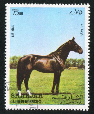 dependencies: SHARJAH AND DEPENDENCIES - CIRCA 1972: stamp printed by Sharjah and Dependencies, shows a Horse, circa 1972 Editorial