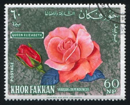 dependencies: SHARJAH AND DEPENDENCIES - CIRCA 1972: stamp printed by Sharjah and Dependencies, shows Rose Queen Elizabeth, circa 1972