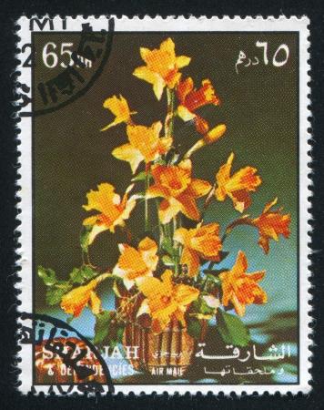 dependencies: SHARJAH AND DEPENDENCIES - CIRCA 1972: stamp printed by Sharjah and Dependencies, shows Hibiscus, circa 1972