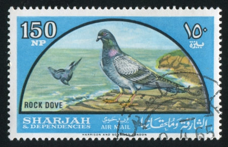 SHARJAH AND DEPENDENCIES - CIRCA 1972: stamp printed by Sharjah and Dependencies, shows Rock Dove, circa 1972 Stock Photo - 17145647