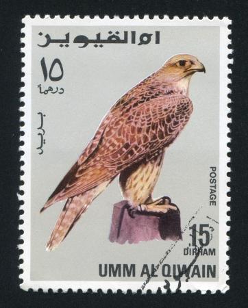 UMM AL-QUWAIN - CIRCA 1972: stamp printed by Umm al-Quwain, shows a Falcon, circa 1972 Stock Photo - 17145317