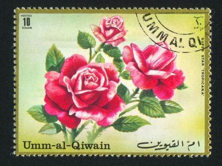 umm: UMM AL-QUWAIN - CIRCA 1972: stamp printed by Umm al-Quwain, shows Rose, circa 1972