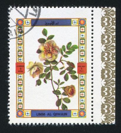 umm: UMM AL-QUWAIN - CIRCA 1972: stamp printed by Umm al-Quwain, shows a Rose, circa 1972 Editorial