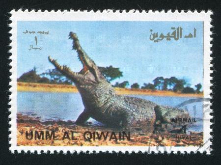 UMM AL-QUWAIN - CIRCA 1972: stamp printed by Umm al-Quwain, shows an Alligator, circa 1972 Stock Photo - 17145740