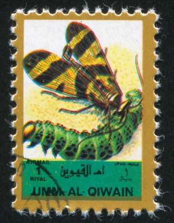 UMM AL-QUWAIN - CIRCA 1972: stamp printed by Umm al-Quwain, shows Butterfly and Larva, circa 1972 Stock Photo - 17145501
