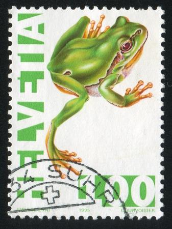 interdigital: SWITZERLAND - CIRCA 1995: stamp printed by Switzerland, shows Green tree frog, circa 1995 Editorial