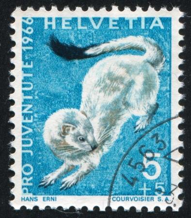 gronostaj: SZWAJCARIA - OKOŁO 1966: Stempel drukowane przez Szwajcarię, pokazuje, gronostaj, ok. 1966