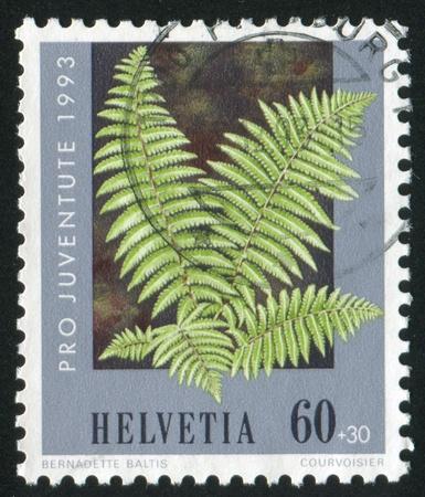 frondage: SWITZERLAND - CIRCA 1993: stamp printed by Switzerland, shows Male fern, circa 1993 Editorial