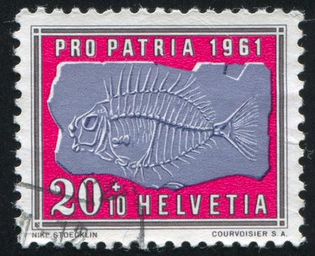 SWITZERLAND - CIRCA 1961: stamp printed by Switzerland, shows Petrified fish, circa 1961 Stock Photo - 18114463