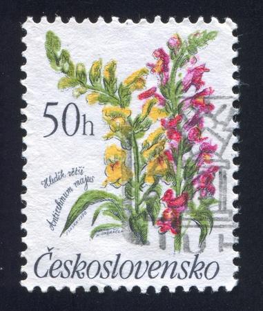 czechoslovakia: CZECHOSLOVAKIA - CIRCA 1990: stamp printed by Czechoslovakia, shows Antirrhinum majus, circa 1990