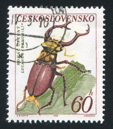 CZECHOSLOVAKIA - CIRCA 1962: stamp printed by Czechoslovakia, shows Stag beetle, circa 1962