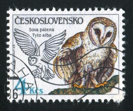 czechoslovakia: CZECHOSLOVAKIA - CIRCA 1986: stamp printed by Czechoslovakia, shows Owls, circa 1986 Editorial