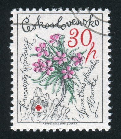 pinks: CZECHOSLOVAKIA - CIRCA 1979: stamp printed by Czechoslovakia, shows Pinks, circa 1979