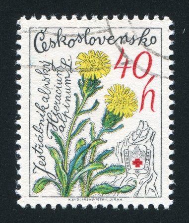 hawkweed: CZECHOSLOVAKIA - CIRCA 1979: stamp printed by Czechoslovakia, shows Alpine Hawkweed, circa 1979