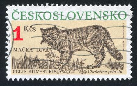 czechoslovakia: CZECHOSLOVAKIA - CIRCA 1990: stamp printed by Czechoslovakia, shows Felis silvestris, circa 1990