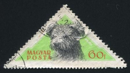 brute: HUNGARY - CIRCA 1956: stamp printed by Hungary, shows Sheepdog Pumi, circa 1956