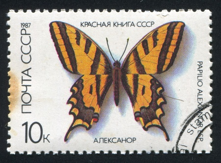 RUSSIA - CIRCA 1987: stamp printed by Russia, shows Butterfly Papilio Alexanor, circa 1987 Stock Photo - 18900348