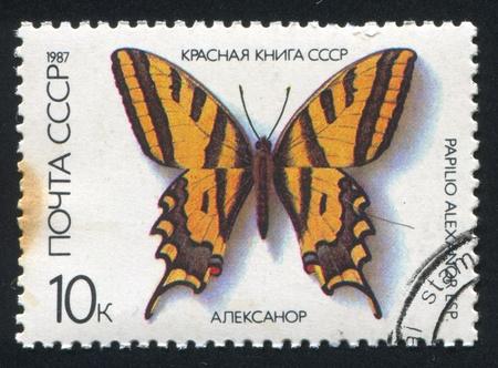 arthropoda: RUSSIA - CIRCA 1987: stamp printed by Russia, shows Butterfly Papilio Alexanor, circa 1987 Editorial