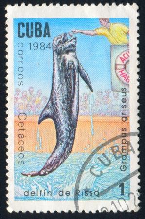 grampus: CUBA - CIRCA 1984: stamp printed by Cuba, shows Dolphin Grampus griseus, circa 1984