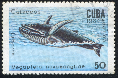 CUBA - CIRCA 1984: stamp printed by Cuba, shows Cachalot Megaptera novaeanliae, circa 1984