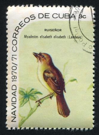 elisabeth: CUBA - CIRCA 1970: stamp printed by Cuba, shows Bird Myadestes elisabeth, circa 1970