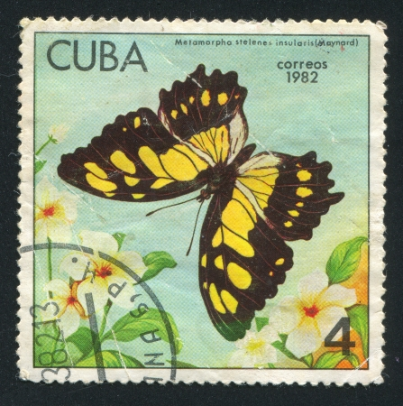 cuba butterfly: CUBA - CIRCA 1982: stamp printed by Cuba, shows Butterfly Metamorpha stelenes insularis, circa 1982 Editorial