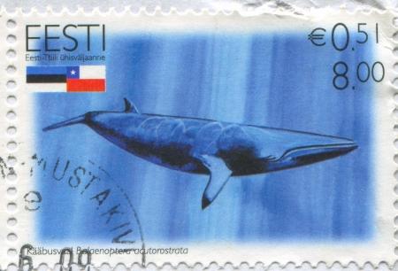 minke: ESTONIA - CIRCA 2006: stamp printed by Estonia, shows Minke whale Balaenoptera acutorostrata, circa 2006
