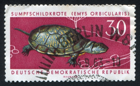 emys: GERMANY - CIRCA 1963: stamp printed by Germany, shows Pond turtle, circa 1963 Editorial