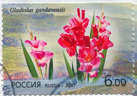 RUSSIA - CIRCA 2007: stamp printed by Russia, shows Gladiolus gandavensis, circa 2007 Stock Photo - 19995735