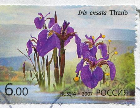 frondage: RUSSIA - CIRCA 2007: stamp printed by Russia, shows Iris insata, circa 2007