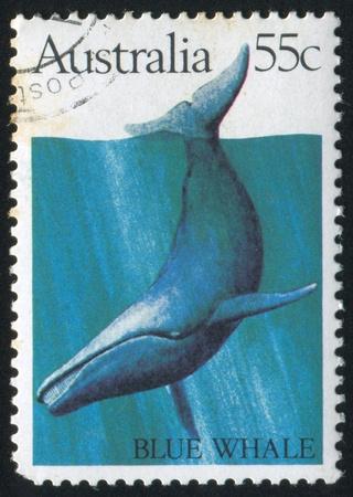ballena azul: AUSTRALIA - CIRCA 1982: sello impreso por Australia, muestra la ballena azul, alrededor de 1982 Editorial
