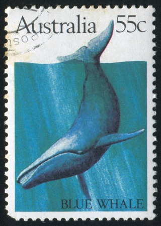 baleen whale: AUSTRALIA - CIRCA 1982: stamp printed by Australia, shows Blue whale, circa 1982 Editorial