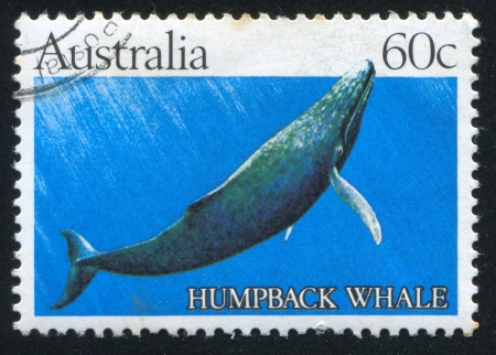 AUSTRALIA - CIRCA 1982: stamp printed by Australia, shows Humpback whale, circa 1982