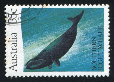 cetacea: AUSTRALIA - CIRCA 1982: stamp printed by Australia, shows Southern right whale, circa 1982 Editorial