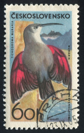 czechoslovakia: CZECHOSLOVAKIA - CIRCA 1965: stamp printed by Czechoslovakia, shows Wall creeper, circa 1965