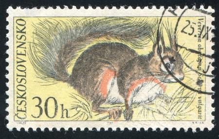 czechoslovakia: CZECHOSLOVAKIA - CIRCA 1967: stamp printed by Czechoslovakia, shows Red Squirrel, circa 1967