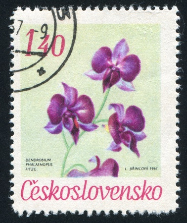 CZECHOSLOVAKIA - CIRCA 1967: stamp printed by Czechoslovakia, shows Moth orchid, circa 1967
