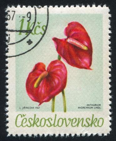 czechoslovakia: CZECHOSLOVAKIA - CIRCA 1967: stamp printed by Czechoslovakia, shows Anthurium, circa 1967
