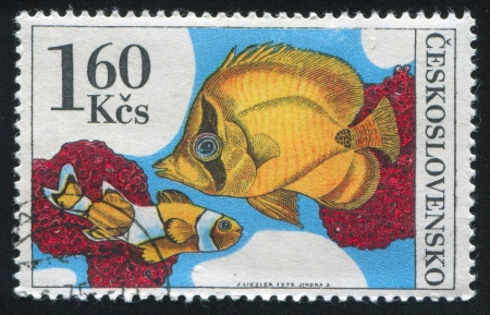 percula: CZECHOSLOVAKIA - CIRCA 1975: stamp printed by Czechoslovakia, shows Amphiprion percula and chaetodon, circa 1975 Editorial