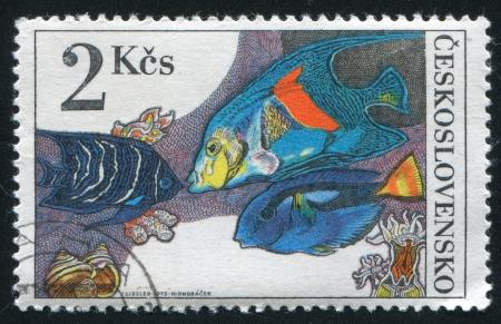 hepatus: CZECHOSLOVAKIA - CIRCA 1975: stamp printed by Czechoslovakia, shows Pomacanthodes semicirculatus, pomocanthus maculosus and paracanthorus hepatus, circa 1975