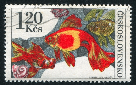 CZECHOSLOVAKIA - CIRCA 1975: stamp printed by Czechoslovakia, shows Carassius auratus, circa 1975 Stock Photo - 20527719