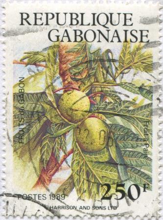 frondage: GABON - CIRCA 1989: stamp printed by Ghana, shows Breadfruit, circa 1989