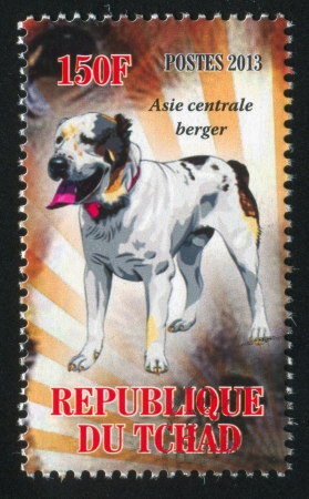 berger: CHAD - CIRCA 2013: stamp printed by Chad, shows dog, asie centrale berger, circa 2013