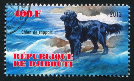 rapport: DJIBOUTI - CIRCA 2013: stamp printed by Djibouti, shows Chien de rapport dog, circa 2013 Editorial