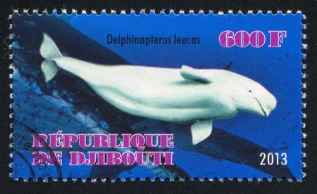 djibouti: DJIBOUTI - CIRCA 2013: stamp printed by Djibouti, shows whale, circa 2013