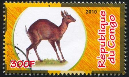 bovid: CONGO - CIRCA 2010: stamp printed by Congo, shows Antelope, circa 2010