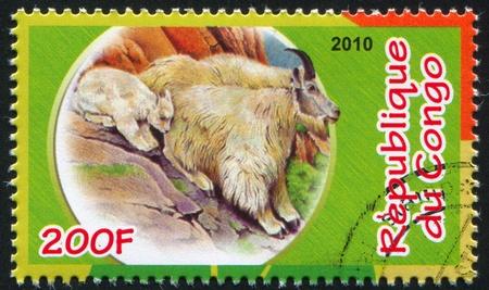 bovid: CONGO - CIRCA 2010: stamp printed by Congo, shows Mountain Goat, circa 2010
